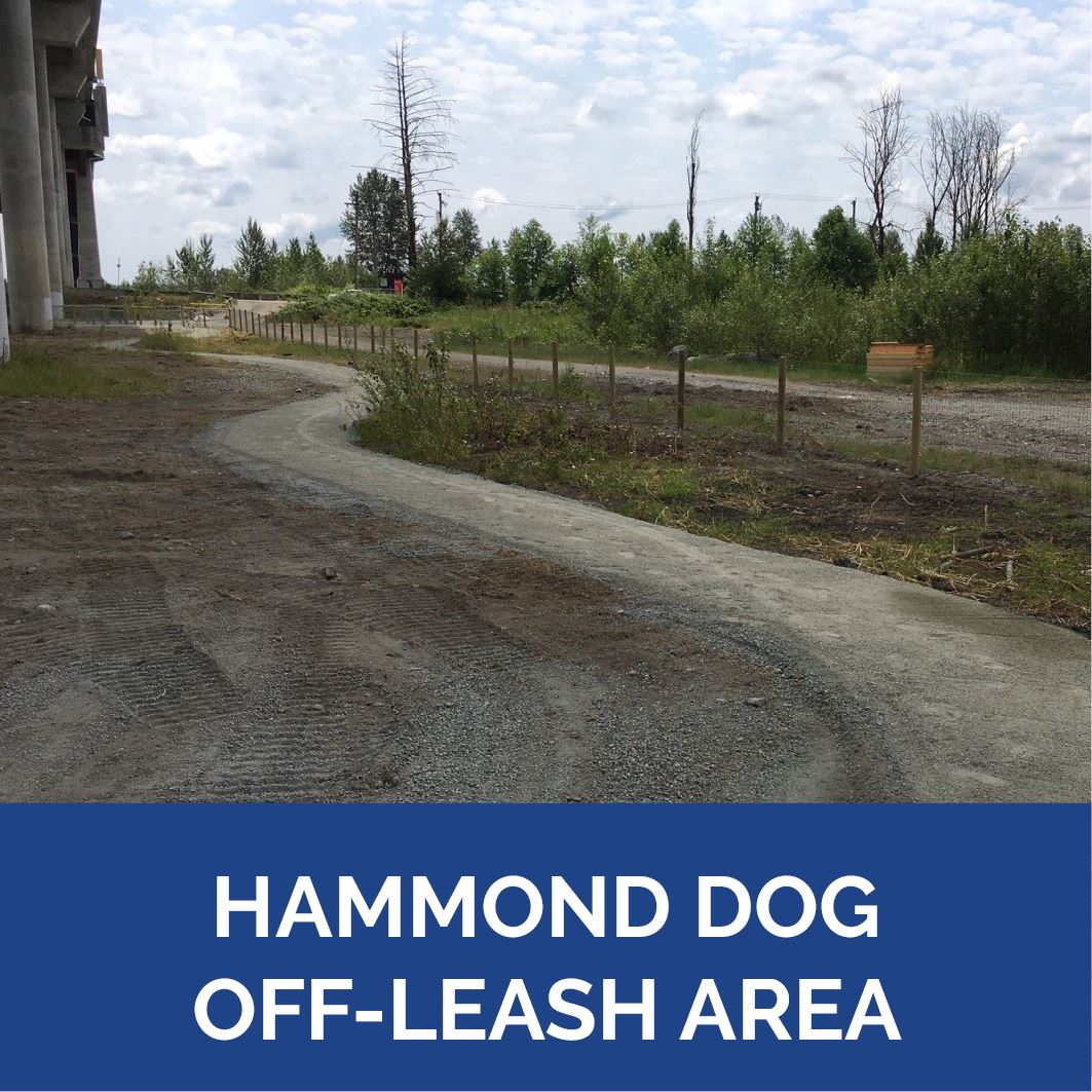 Hammond Dog Off-Leash - Button