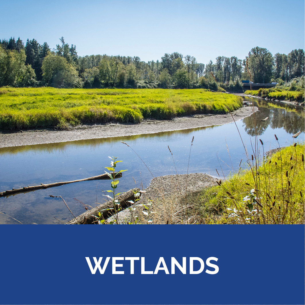 Wetlands Button