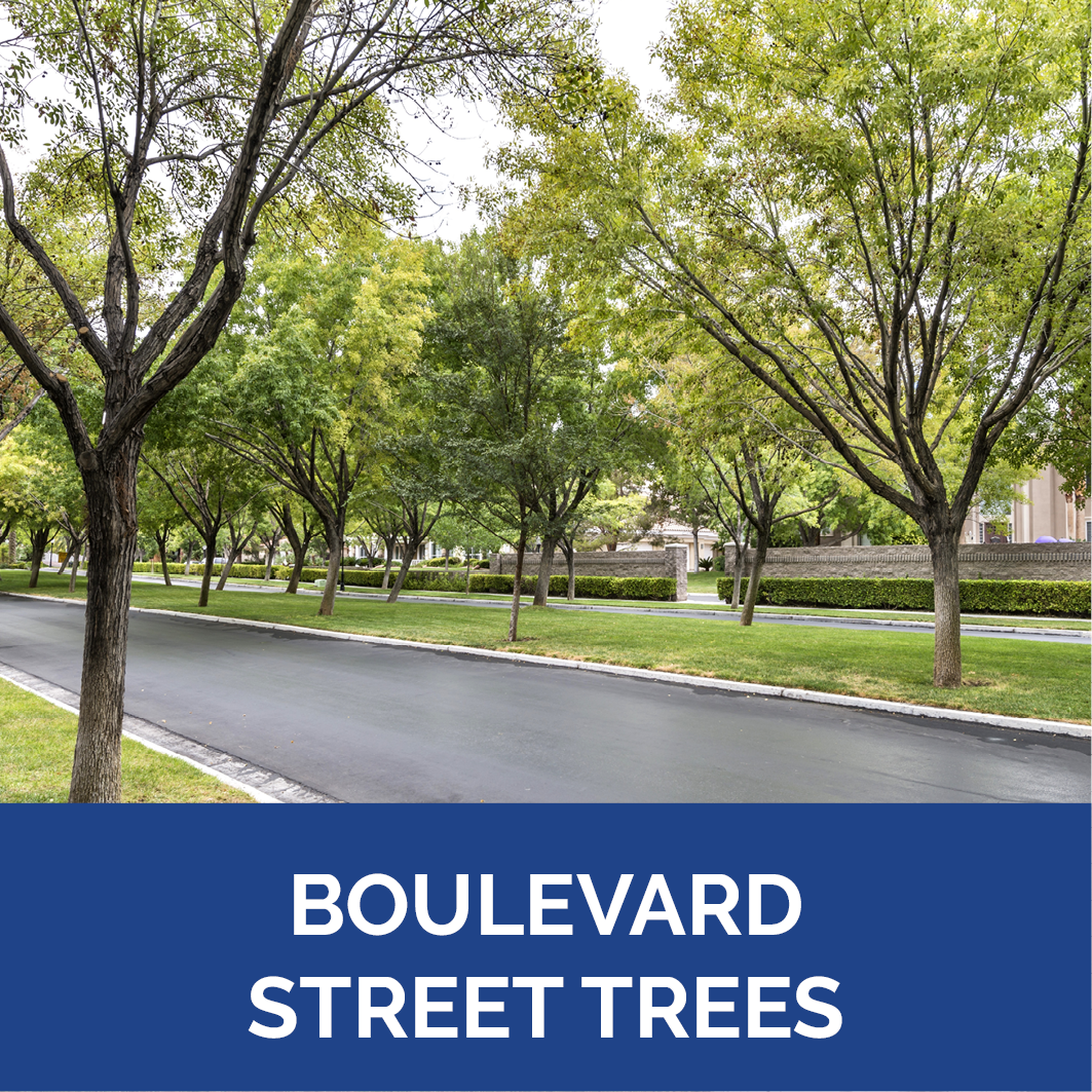 Boulevard Street Trees Button