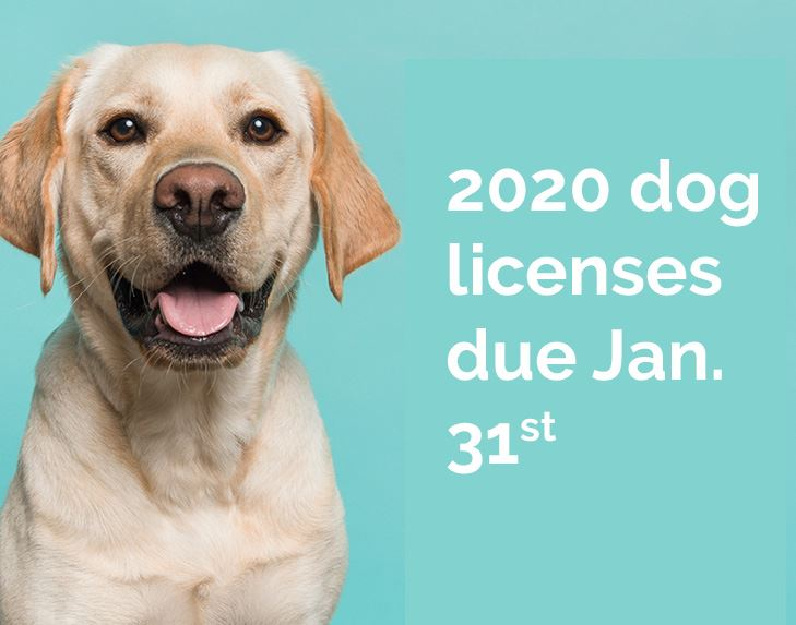 dog license_spotligh