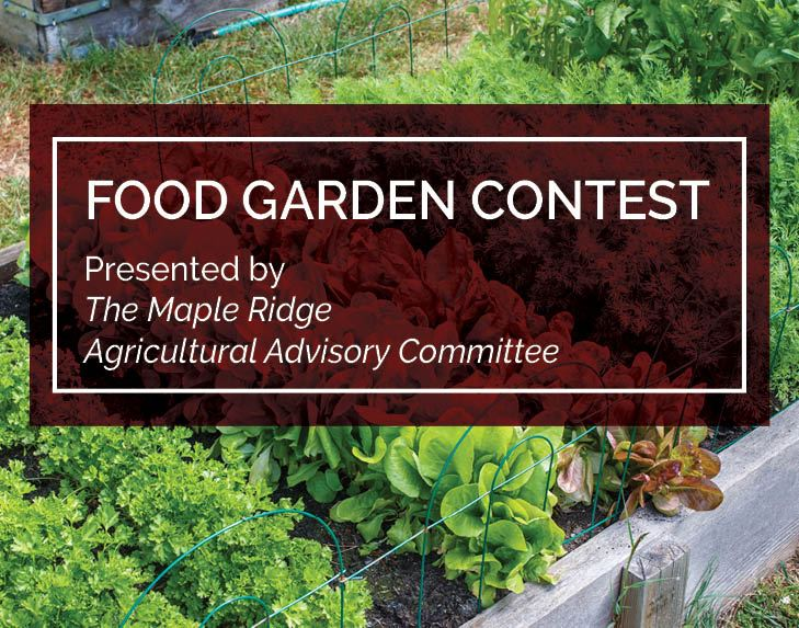 Food garden contest_spotlight