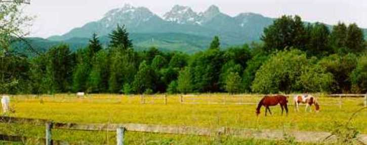 Golden Ears with Horses