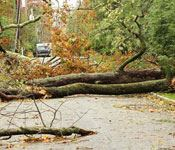 Image of a downed tree across a roadway